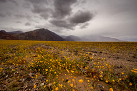 Superbloom Storm: Death Valley National Park