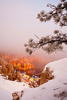 Lifting Fog: Bryce Canyon National Park