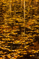 Fall Reflection: Telluride